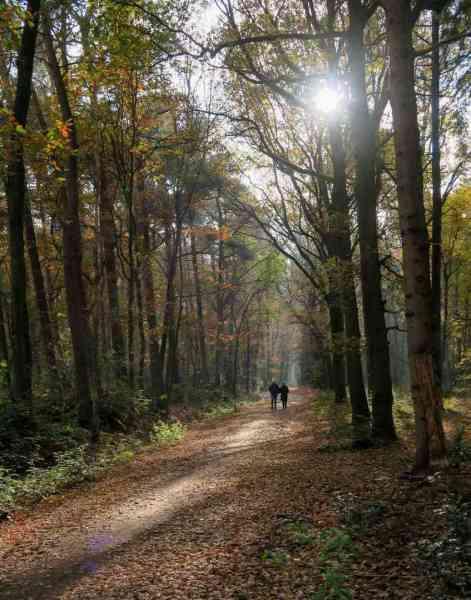 BSG-wandeling-Hilvarenbeek-kl16