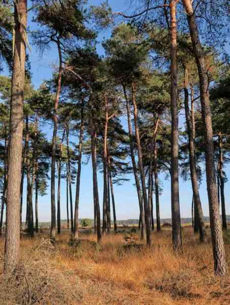 BSG-wandeling-Hilvarenbeek-kl22