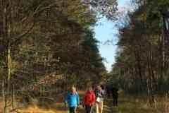 BSG-wandeling-Hilvarenbeek-kl19