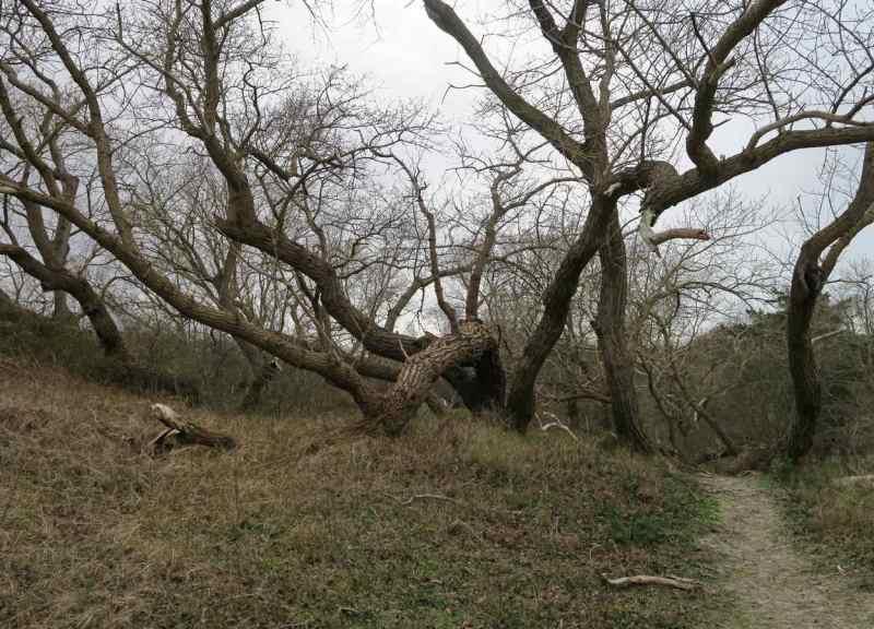 BSG-wandeling-Meijendel_mrt-2020_29