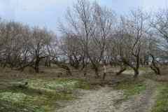 BSG-wandeling-Meijendel_mrt-2020_10