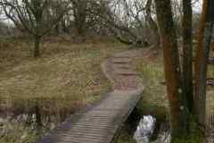 BSG-wandeling-Meijendel_mrt-2020_7