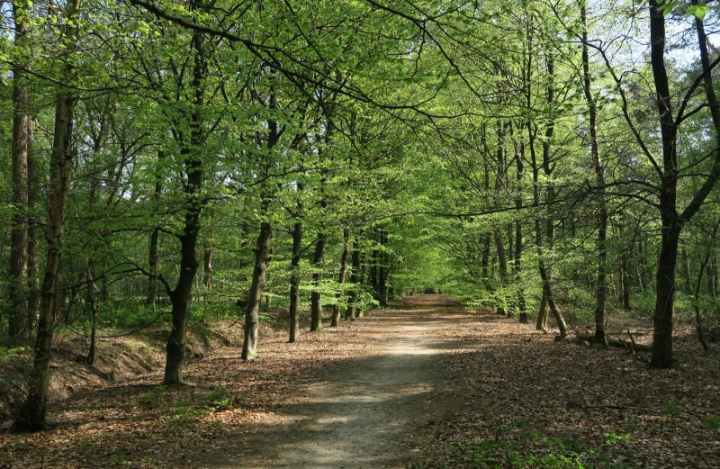 BSG wandeling Zundert apr18-57