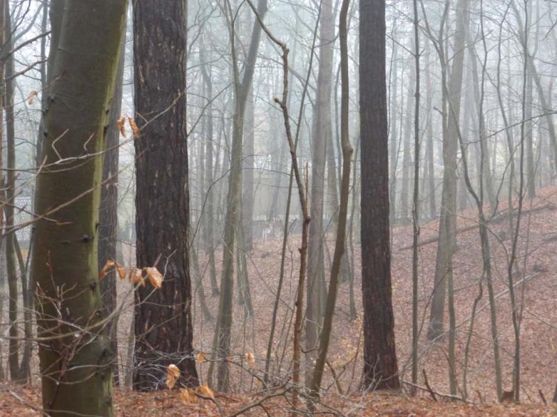 BSG wandeling Overveen-10