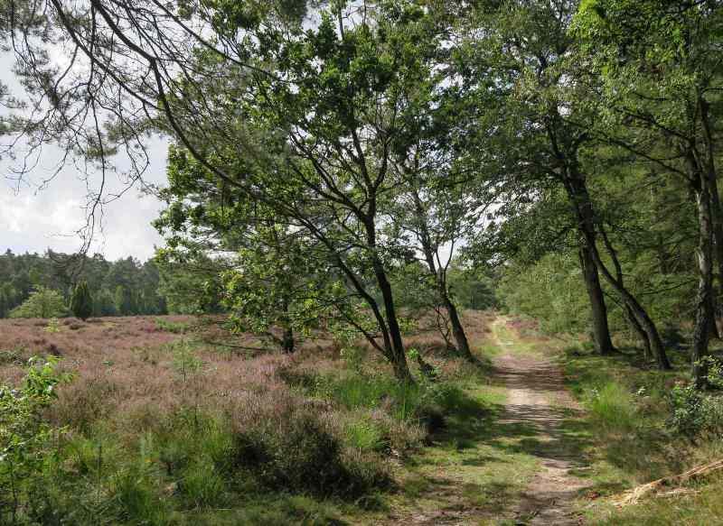 BSG-wandeling-Veenendaag-sept-2019_6